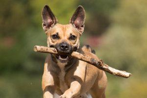 Cómo puede usar la caminata de perros para un gran ejercicio