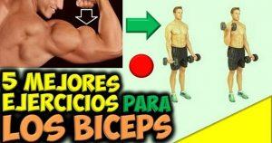 Construir y descomponer los músculos en el entrenamiento con pesas