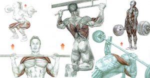 ¿Debo hacer ejercicios compuestos o de aislamiento si quiero fortalecerme?