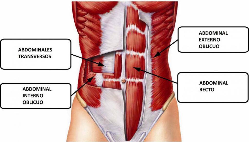 Photo of La importancia del músculo Abdominis Transversal (TVA)