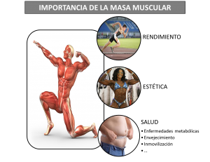 La (verdadera) definición de fuerza muscular