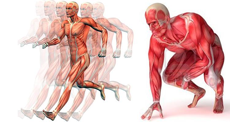 Photo of Cómo el ácido láctico afecta a su rendimiento atlético