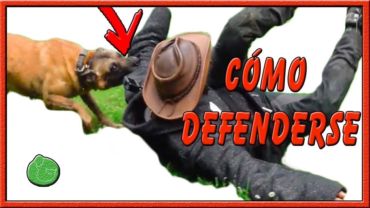 Photo of Cómo evitar un ataque de un perro y ser mordido