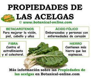 Información sobre la nutrición y los beneficios para la salud de las acelgas