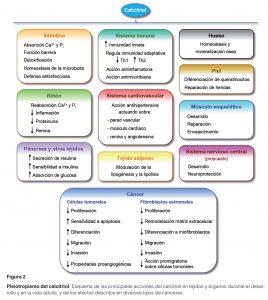 La vida útil de las diferentes vitaminas depende de la potencia