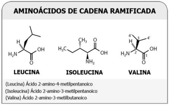 Photo of Los beneficios de los aminoácidos de cadena ramificada