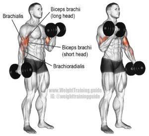 Mancuernas Biceps