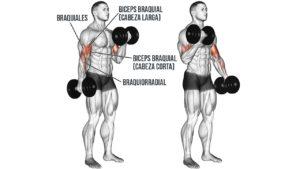 Mancuernas Para Biceps