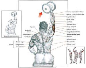 Mancuernas Para Triceps