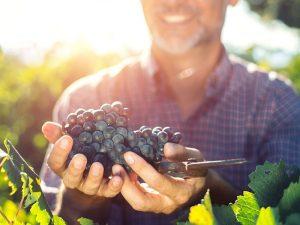 ¿Puede el resveratrol antioxidante del vino ayudarle a vivir más tiempo?
