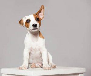Voltea a tu perro con una postura salvaje